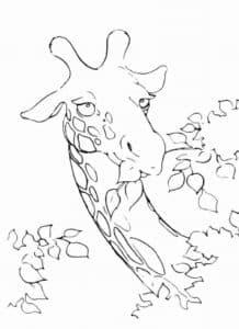 жираф ест листья