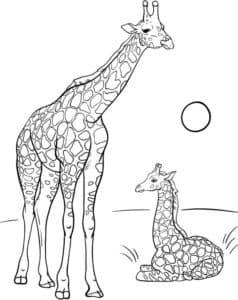 жирафы и солнце