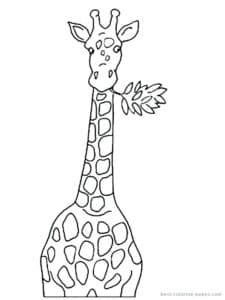 жираф с цветочком во рту