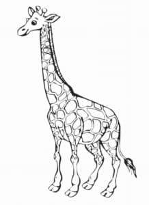 раскраска для детей жираф