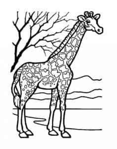 жираф на природе