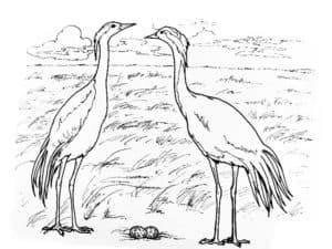 два журавля