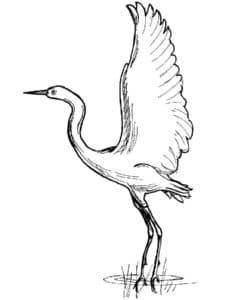 журавль с большими крыльями