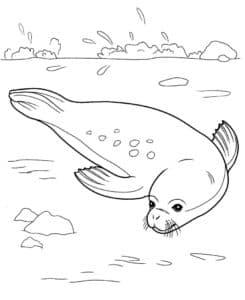 тюлень на отдыхе