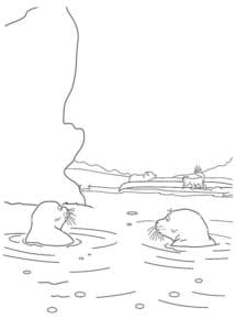 тюлени в воде