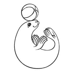 цирковой тюлень