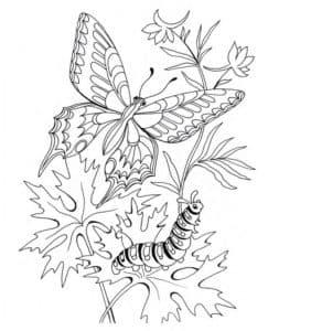бабочка и гусеница