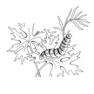 гусеница в траве