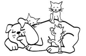 большая собака и котята