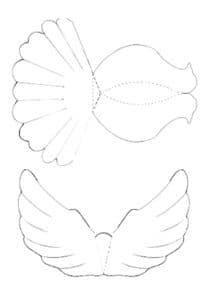хвост голубя