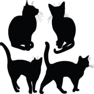 усатые коты трафарет