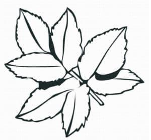 листочки трафарет