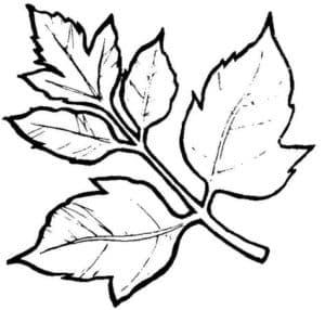 листья на ветке трафарет