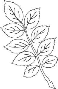 листья с веткой шаблон