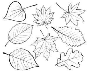 листочки трафарет и раскраска