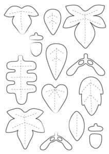 формы листьев и желудей