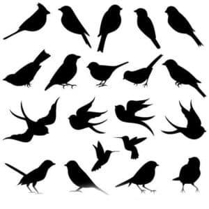 мелкие птички трафарет