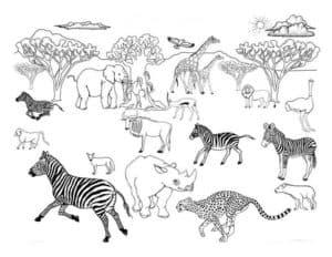 животные Африки раскраска