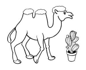 Верблюд и кактус