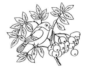 птичка на рябине