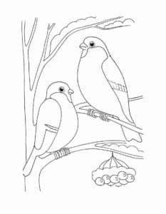 две птицы на ветке раскраска детская