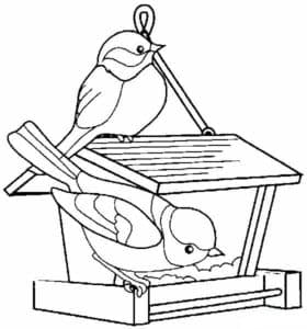 птички кушают