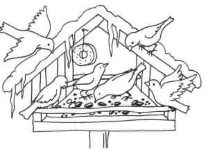 птицы кушают раскраска