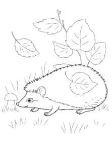 Ежик с листьями