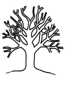 Дерево на котором нет листьев