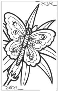 Бабочка на цветке раскраска для ребенка