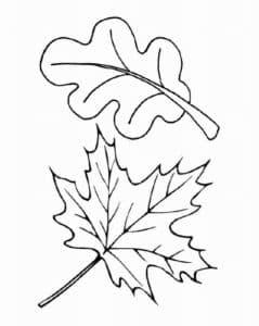 лист клена и каштана