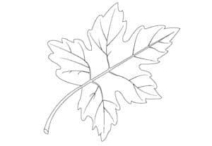 раскраска листочек