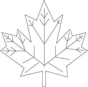 красивый лист клена