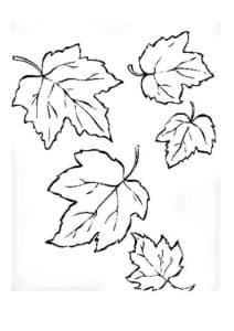 листья клена раскраска