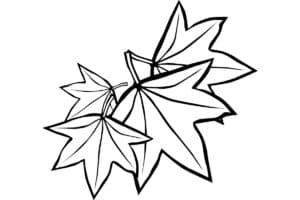 детская раскраска кленовые листья