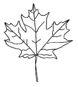 раскраска для детей лист клена