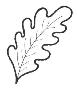 листок дуба детская раскраска