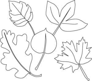 листья деревьев раскраска