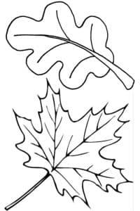 лист клена и дуба