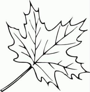 раскраска детская лист клена
