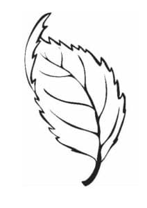листик