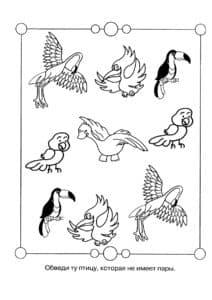 найди птицу без пары
