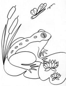 лягушка на листке и бабочка