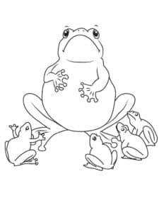 раскраска жабы
