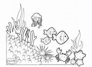 рыбы и морские звезды