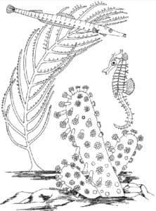кораллы и морской конек