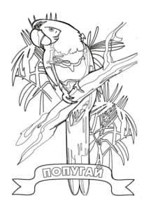 попугай детская раскраска