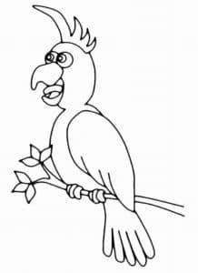Попугай с большими глазами