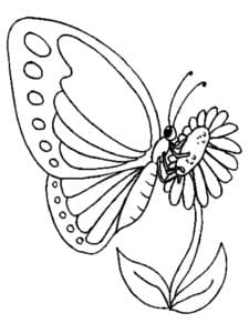 бабочка на большом цветке