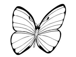 полосатая бабочка раскраска